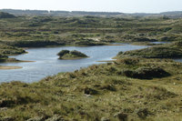 'Wasserplakken' in Midsland aan Zee.jpg